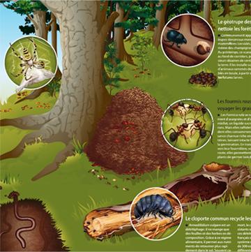 Illustrations de forêt